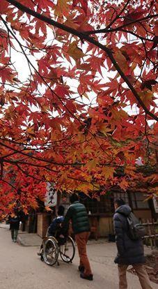 お互い様旅行 2019紅葉&イルミネーション_f0195579_10021217.jpg