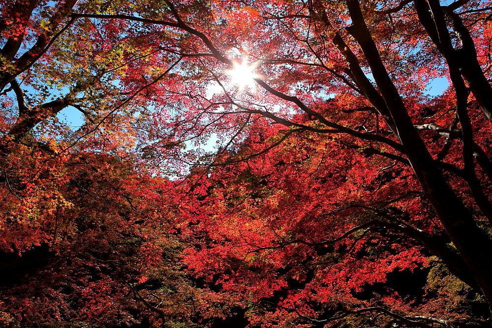 毛呂山町 モミジの鎌北湖 その2_e0165983_11254450.jpg