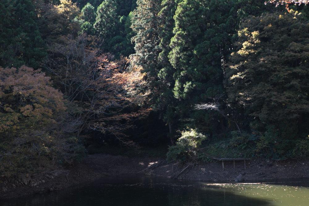 毛呂山町 モミジの鎌北湖 その2_e0165983_11260358.jpg