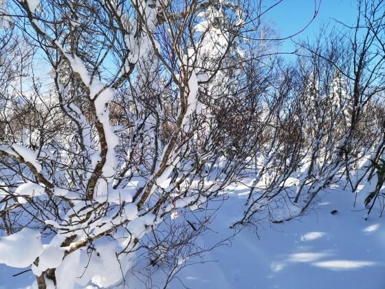 BCスキー 余市岳_d0198793_13122681.jpg