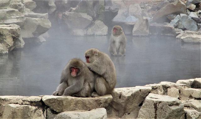 なかなか 温泉に入らないSNOW MONKY_b0163804_20362917.jpg