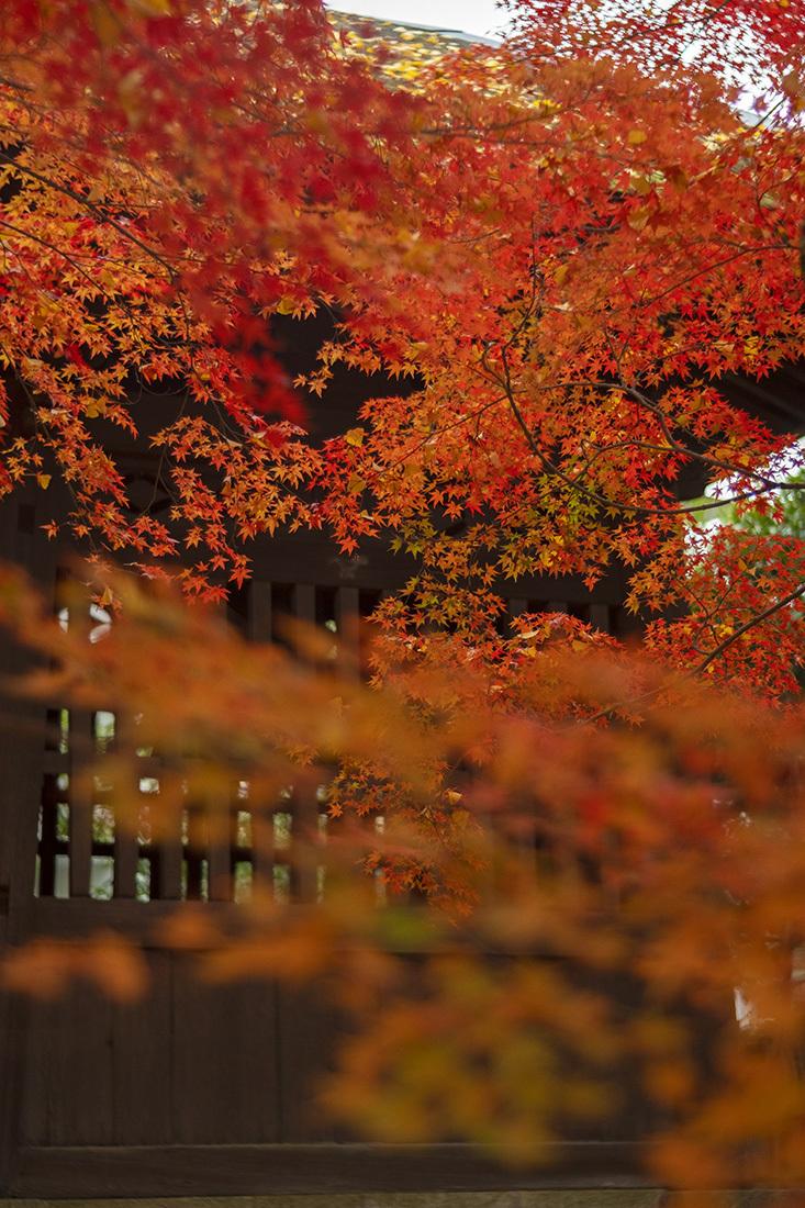蓮華寺(1)_b0221605_18315999.jpg