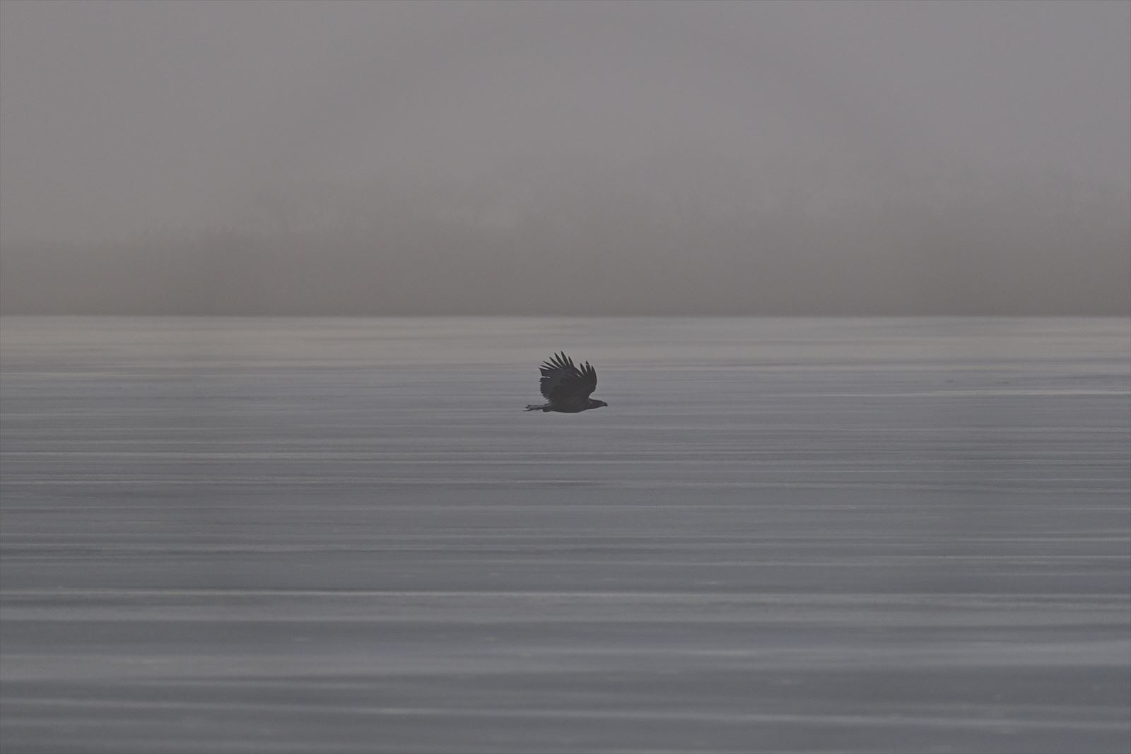 ウトナイ湖のオジロワシ_a0145819_15242626.jpg