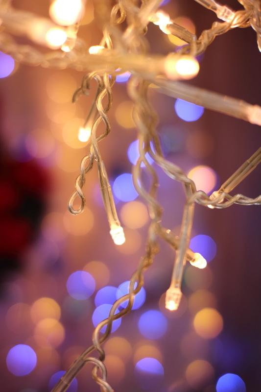 植物園のクリスマス_e0169421_21244570.jpg