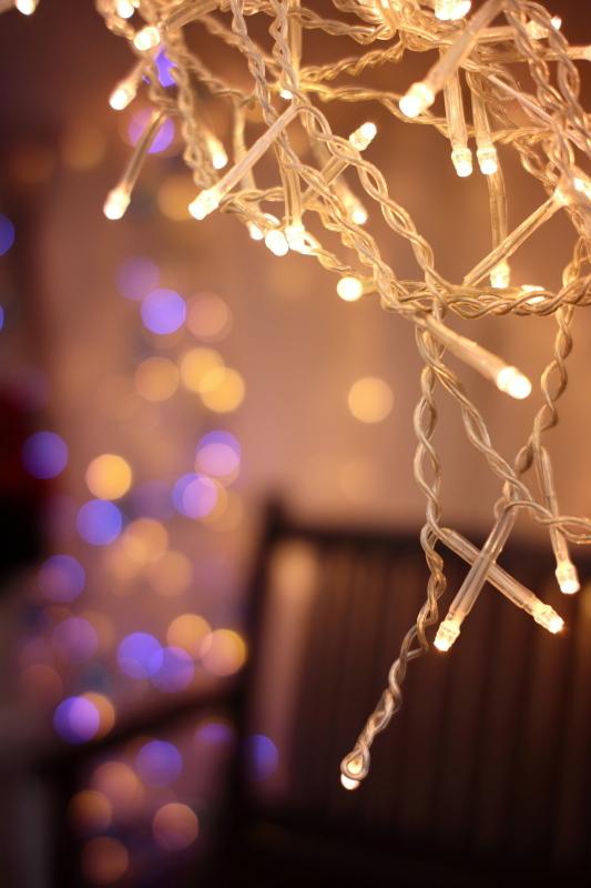 植物園のクリスマス_e0169421_21244590.jpg
