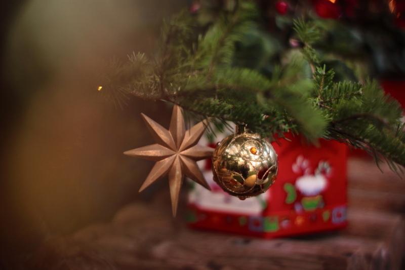 植物園のクリスマス_e0169421_21244609.jpg