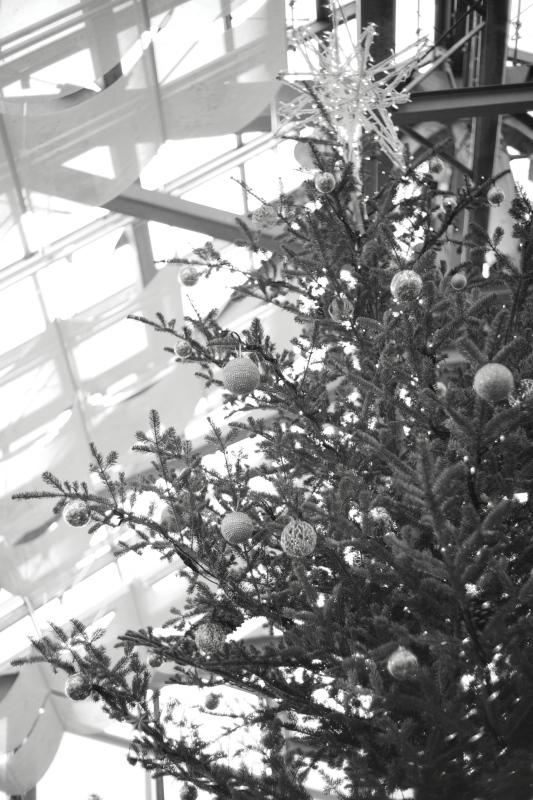 植物園のクリスマス_e0169421_21244835.jpg