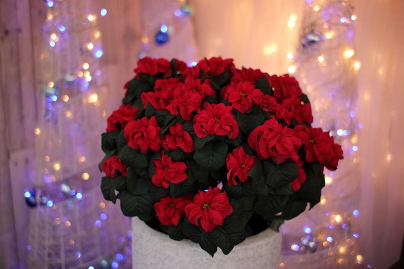植物園のクリスマス_e0169421_21244869.jpg