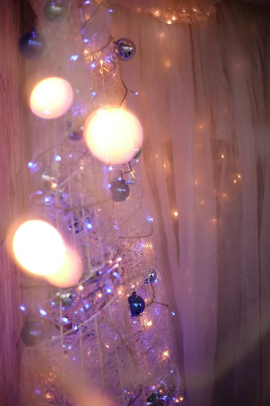 植物園のクリスマス_e0169421_21244934.jpg