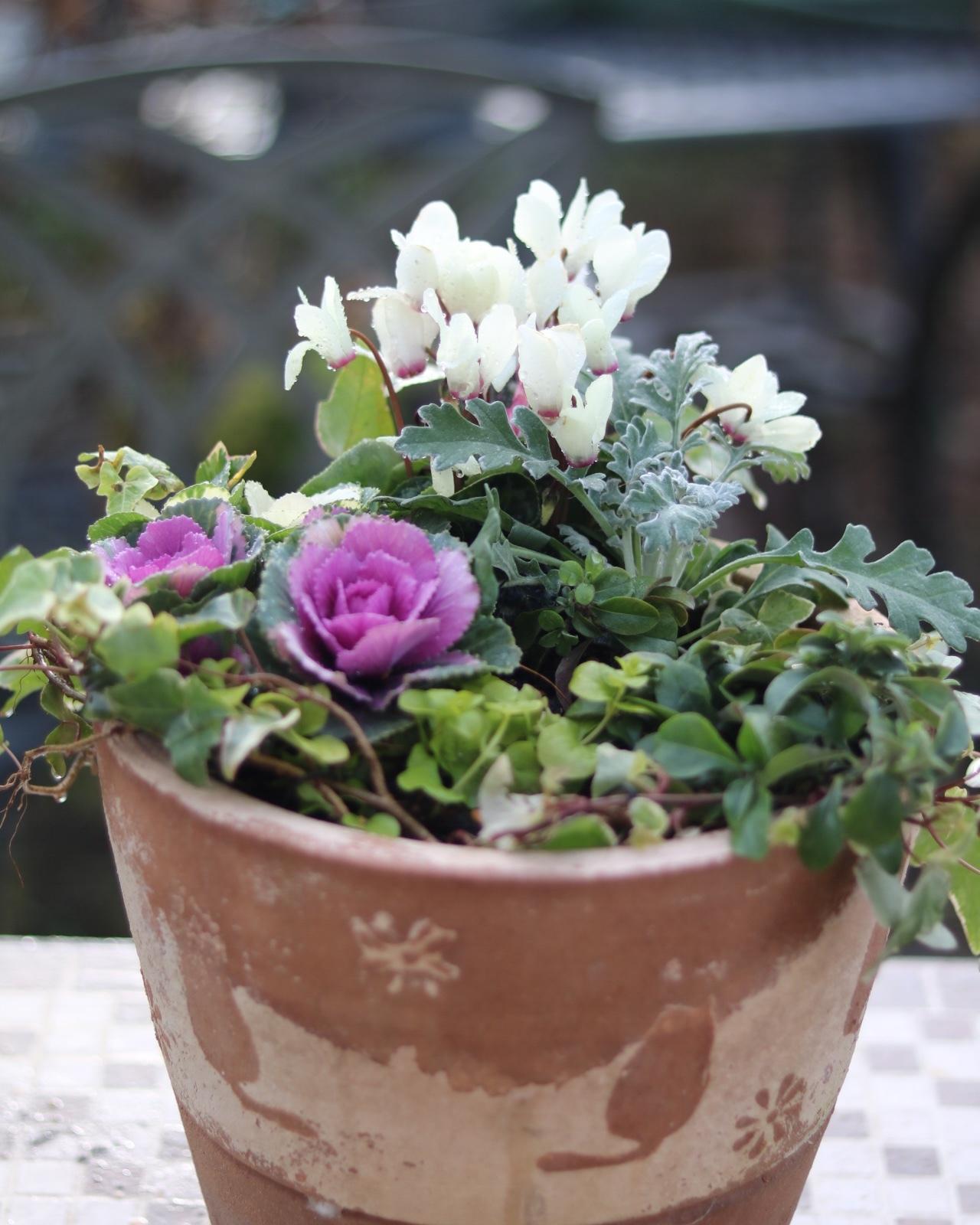 冬の鉢植え_c0366722_14374901.jpeg