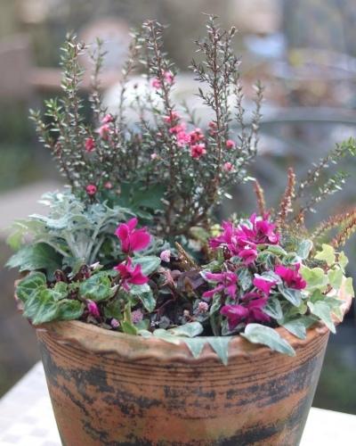 冬の鉢植え_c0366722_14382050.jpeg