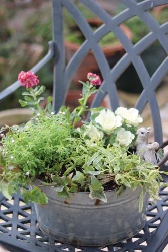 冬の鉢植え_c0366722_14395897.jpeg