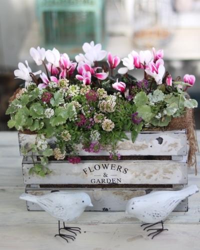 冬の鉢植え_c0366722_14403026.jpeg