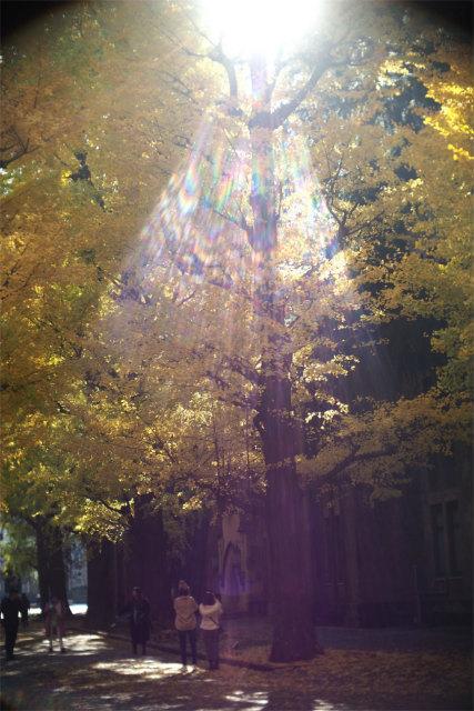 光のシャワー_d0338526_16303044.jpg