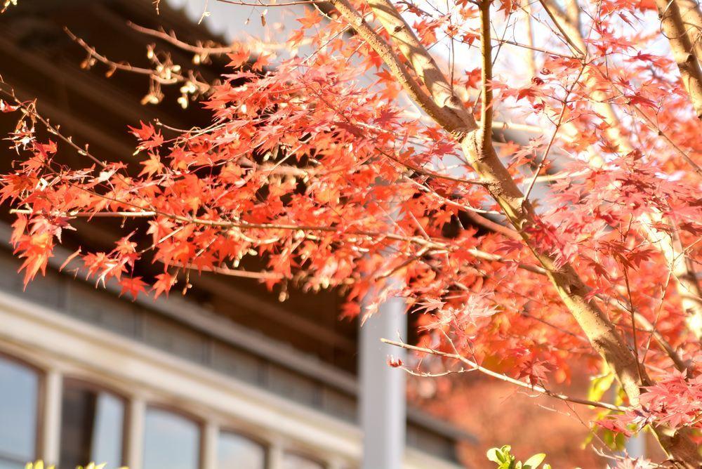 京都市電名古屋電停付近の紅葉_e0373930_23360835.jpg