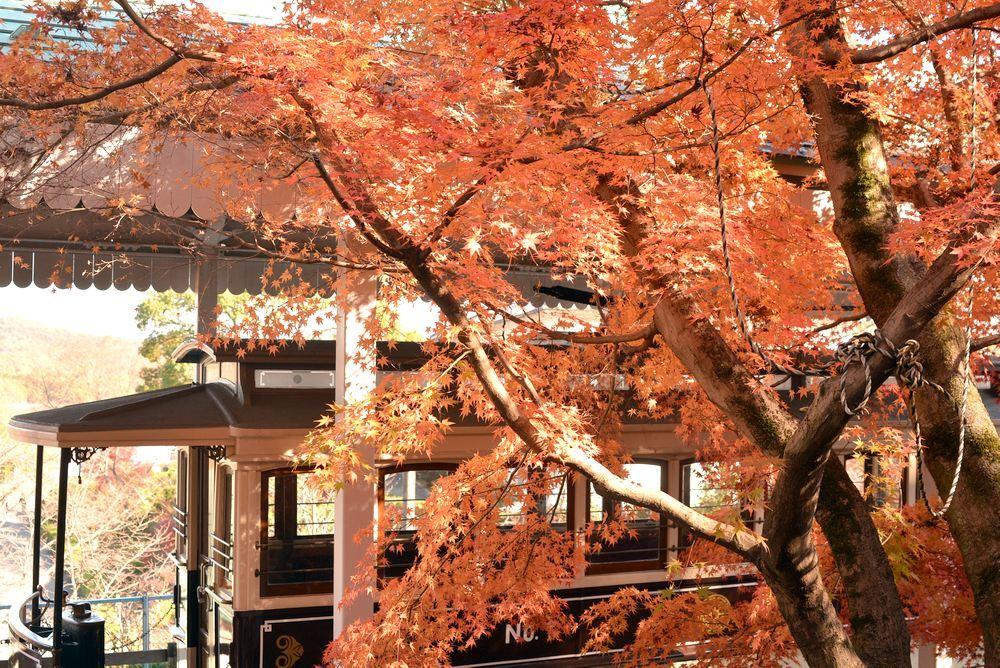 京都市電名古屋電停付近の紅葉_e0373930_23360851.jpg