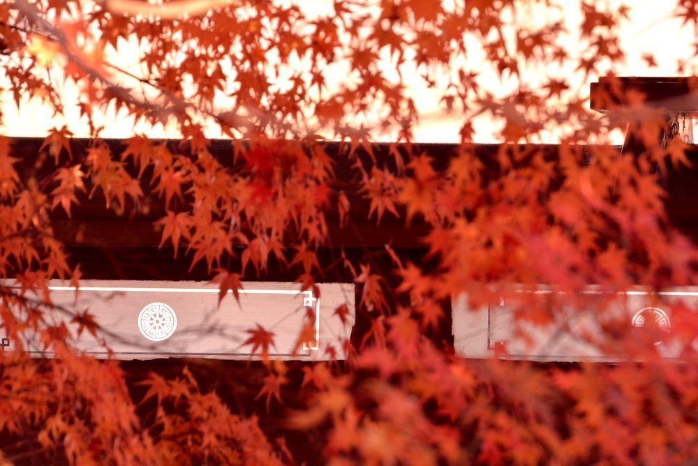 京都市電名古屋電停付近の紅葉_e0373930_23360933.jpg