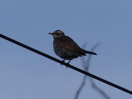 水鳥を追い払っているのは、この鳥でしょうか?_a0123836_17231091.jpg