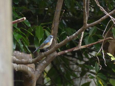水鳥を追い払っているのは、この鳥でしょうか?_a0123836_17231351.jpg