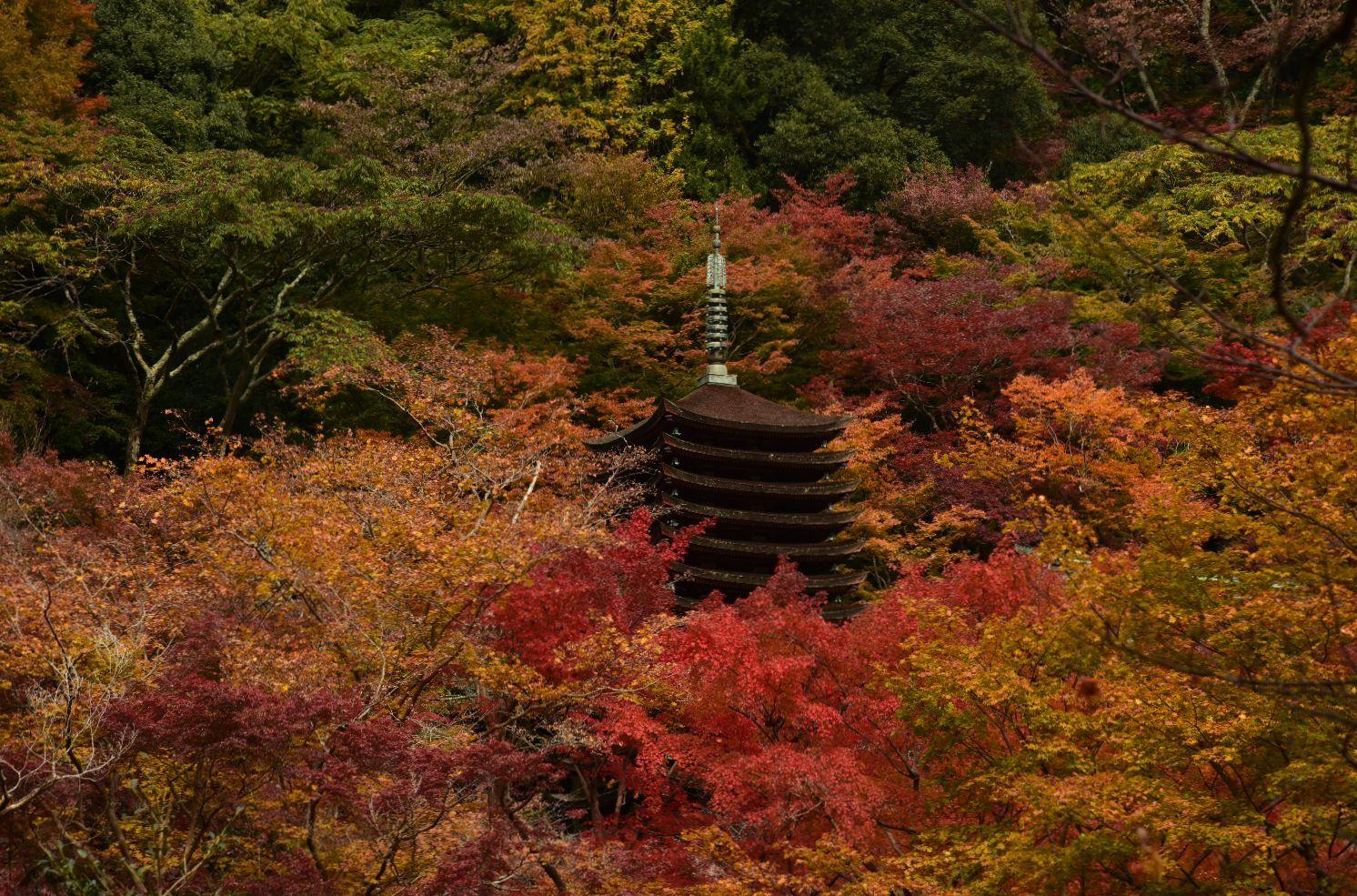 維摩経と談山神社(藤原鎌足)_a0237937_23040974.jpg