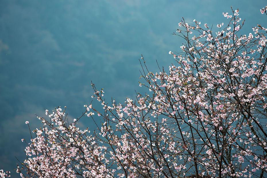 冬の桜_c0067040_21142878.jpg