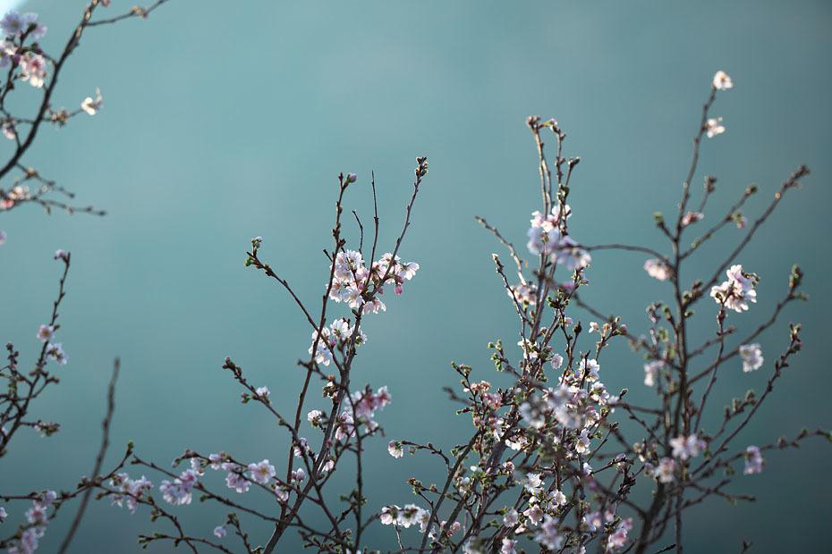 冬の桜_c0067040_21152261.jpg