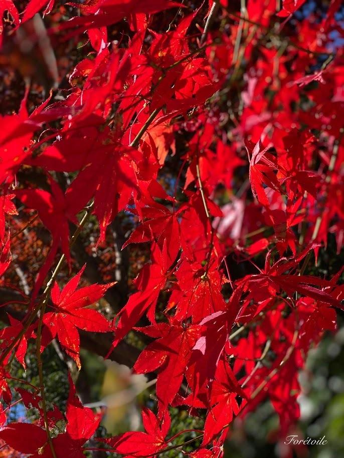 京都観光_f0377243_13114039.jpg