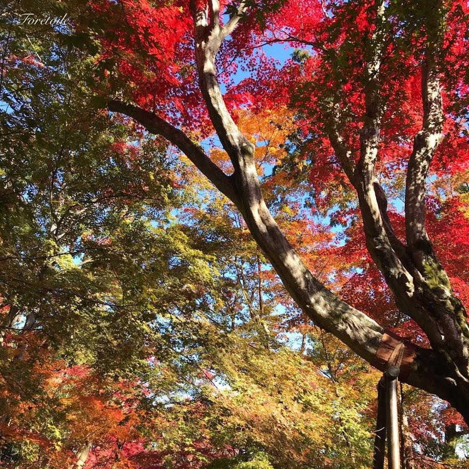 京都観光_f0377243_13114944.jpg