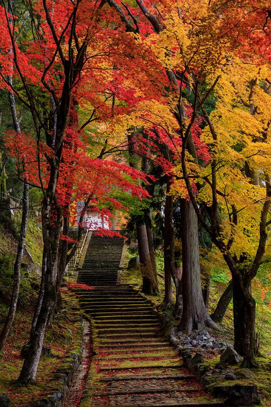 紅葉が彩る京都2019 錦秋の積善寺_f0155048_025125.jpg