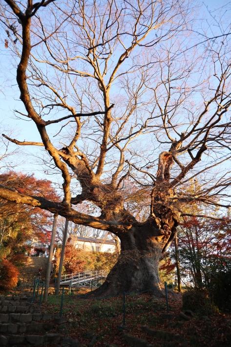 太田金山のあれこれ(1) (2019/12/3撮影)_b0369971_11215487.jpg