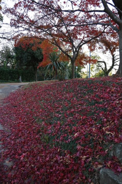 太田金山のあれこれ(1) (2019/12/3撮影)_b0369971_11221258.jpg