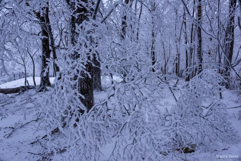 大台ヶ原が凍る日 1_c0350572_21552205.jpg