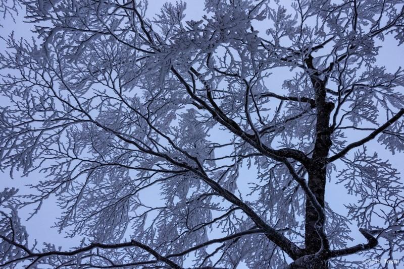 大台ヶ原が凍る日 1_c0350572_21553275.jpg