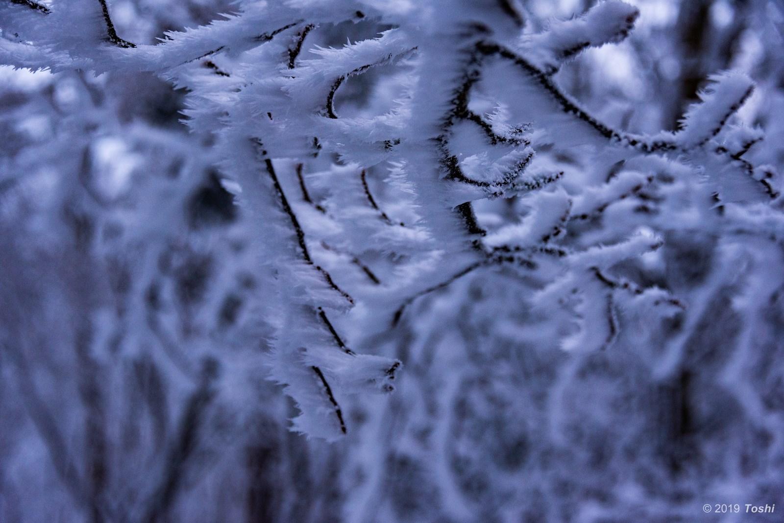 大台ヶ原が凍る日 1_c0350572_21553629.jpg