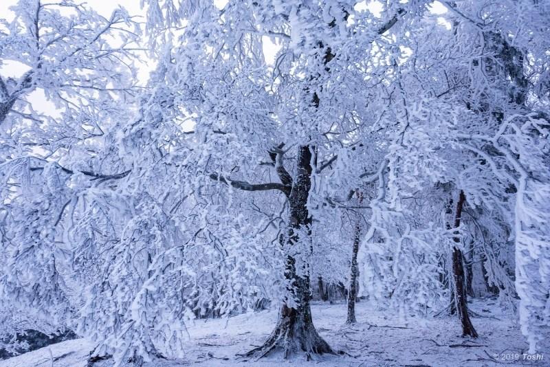 大台ヶ原が凍る日 1_c0350572_21561592.jpg