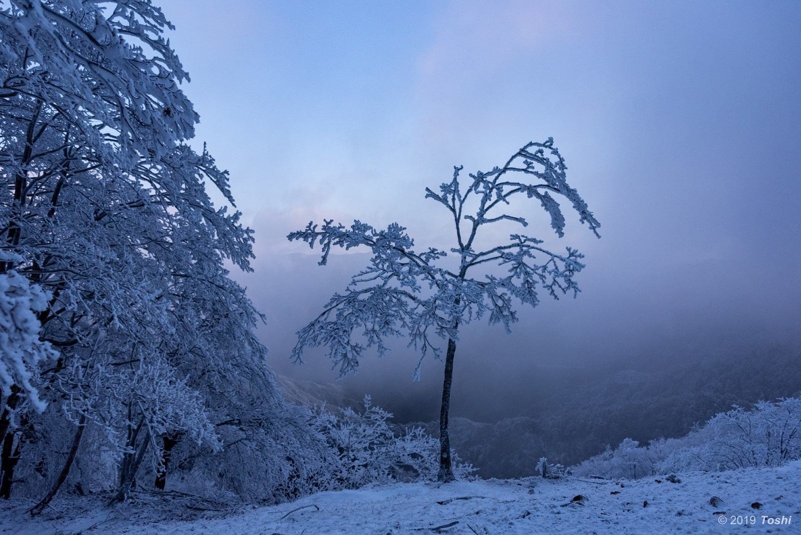 大台ヶ原が凍る日 1_c0350572_21562726.jpg