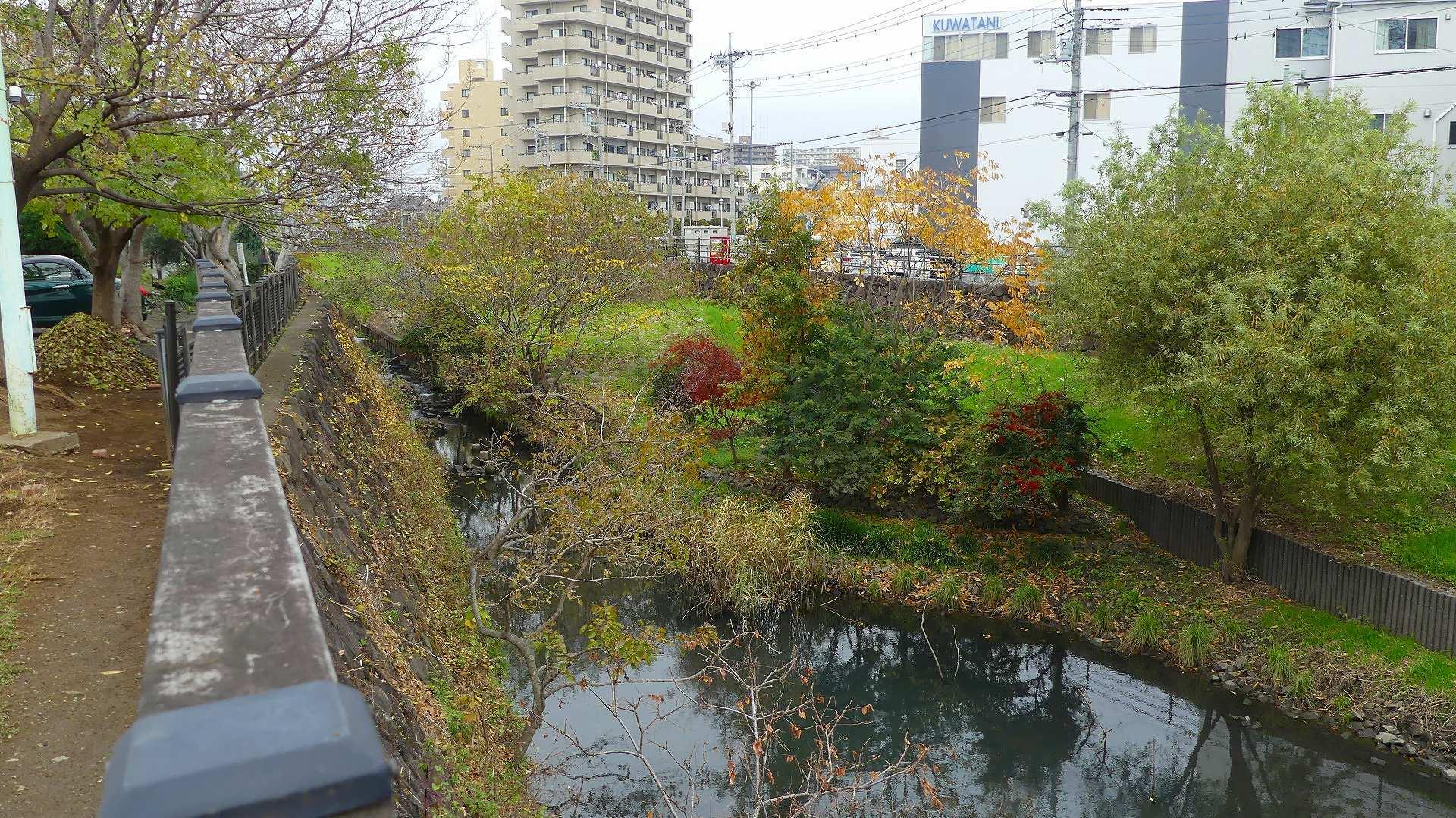 師走のカワセミ広場です 【 2019 12/11(水) 】_a0185081_14255678.jpg