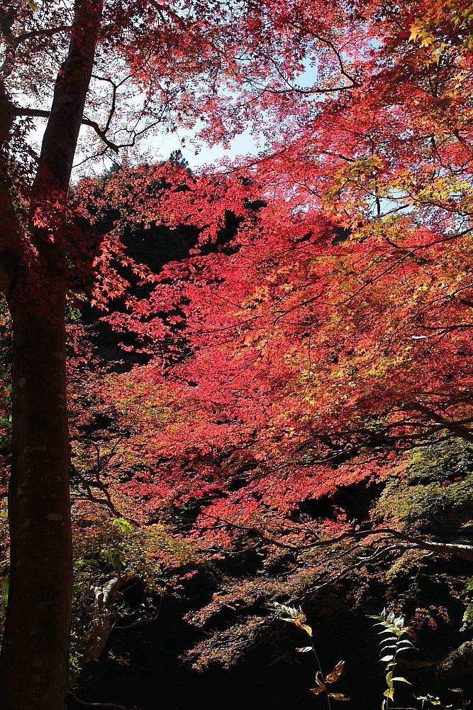 毛呂山町 モミジの鎌北湖 ラスト_e0165983_10132465.jpg