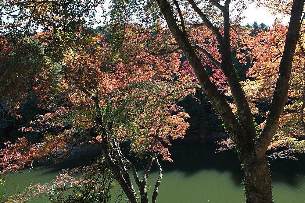 毛呂山町 モミジの鎌北湖 ラスト_e0165983_10133560.jpg