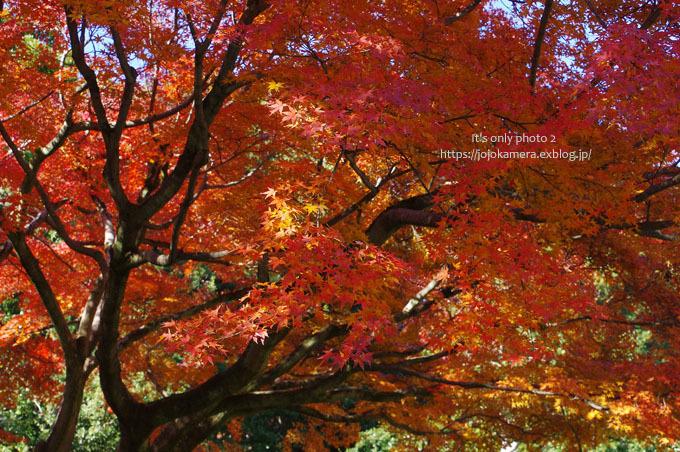 秋は終わってしまったけれど*Ⅱ_b0391986_18515746.jpg