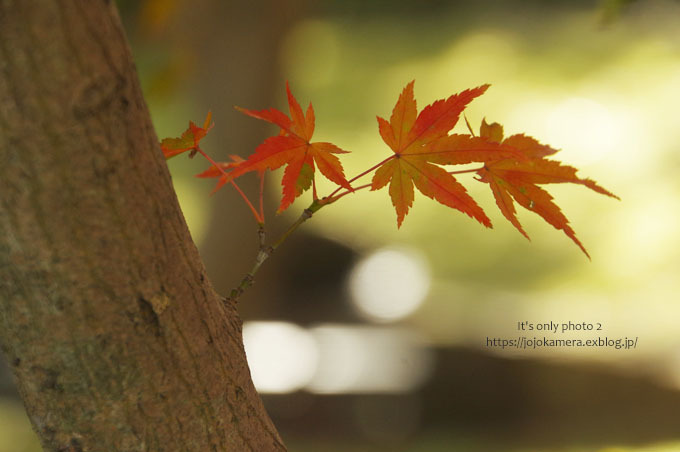 秋は終わってしまったけれど*Ⅱ_b0391986_18524441.jpg