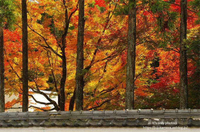 秋は終わってしまったけれど*Ⅱ_b0391986_18530331.jpg