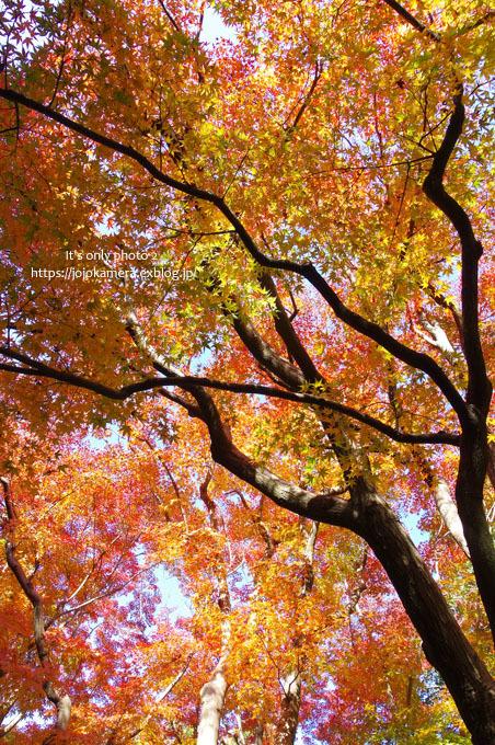 秋は終わってしまったけれど*Ⅱ_b0391986_18532428.jpg