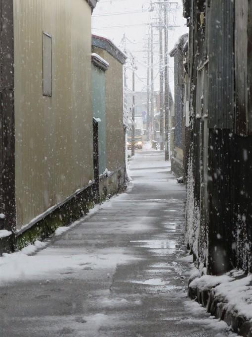 すっかり冬舞台。でも元気です。_a0214206_16053255.jpg