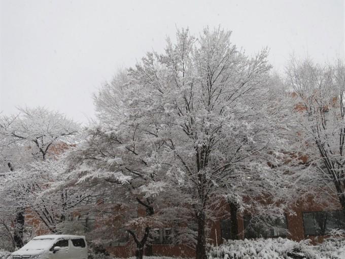 すっかり冬舞台。でも元気です。_a0214206_16065031.jpg