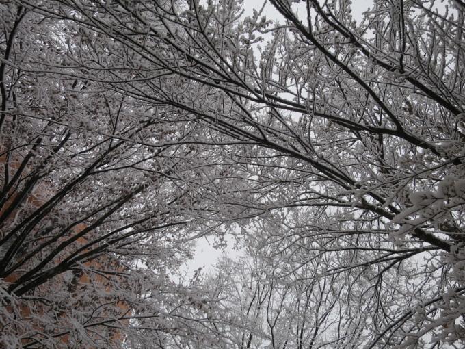 すっかり冬舞台。でも元気です。_a0214206_16072260.jpg