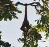 2019年10月19日、中米コスタリカの練った雨林でで、大ウミガメの産卵、華やかな鳥などを楽しむ_c0242406_17422976.jpg