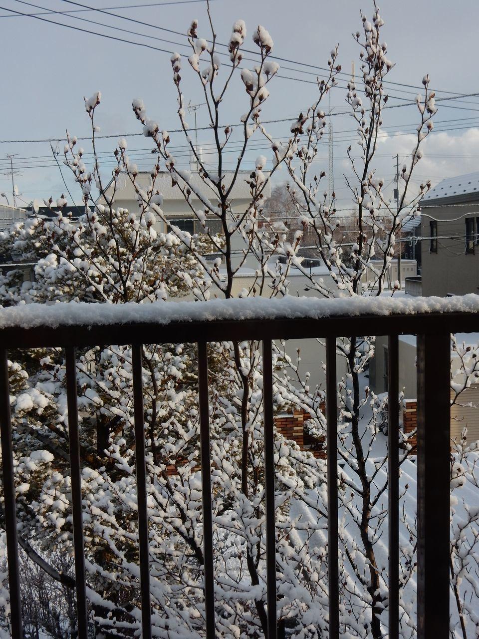 雪戻る_c0025115_21272178.jpg