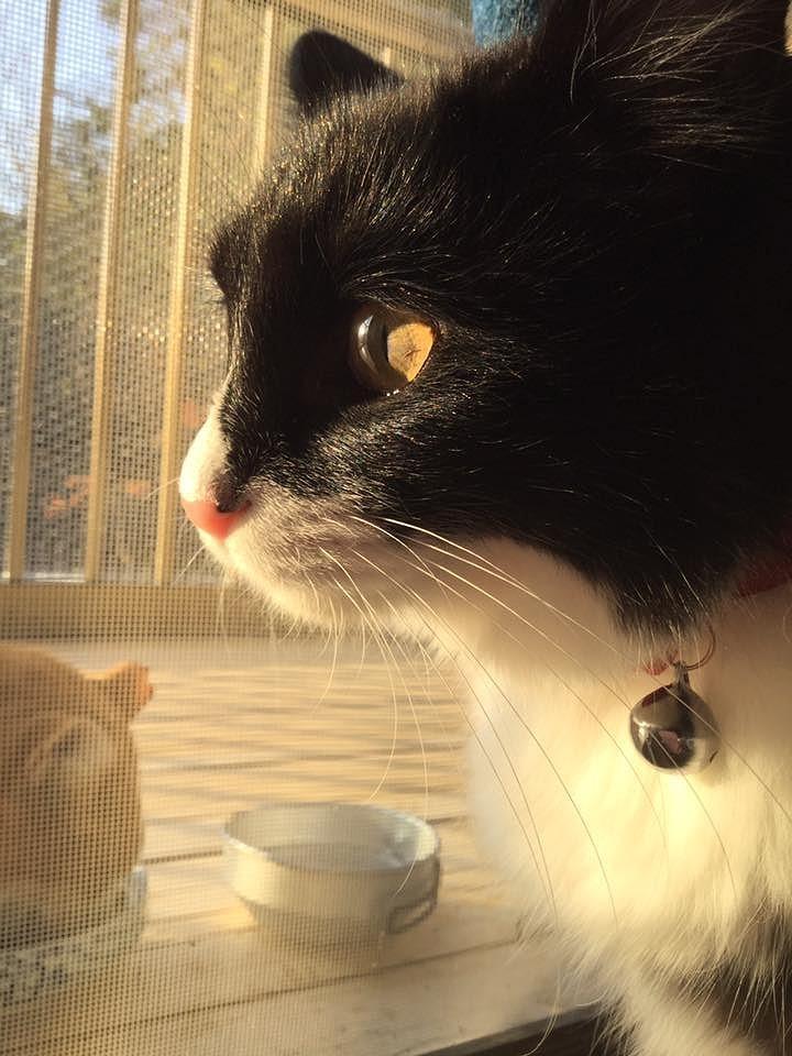 Sweet kitty 15_d0065116_20342344.jpg