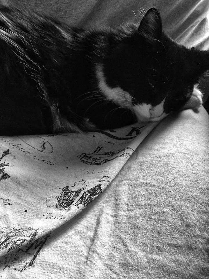 Sweet kitty 15_d0065116_20365960.jpg
